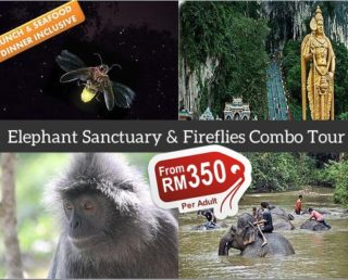 Elephant Sanctuary & Fireflies Combo Tour (Group)