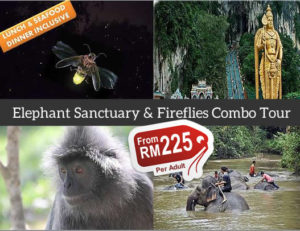 Elephant Sanctuary Fireflies Combo Tour