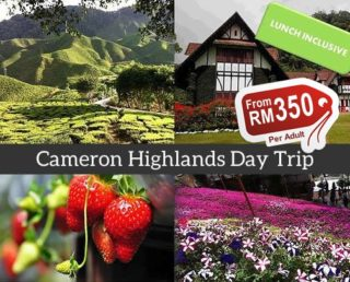 Cameron Highlands One Day Tour (Group)