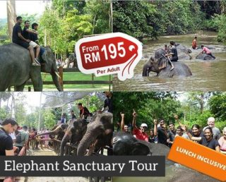 Kuala Gandah Elephant Sanctuary Tour (Full Day) (Group)