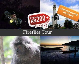 Kuala Selangor Fireflies Tour (Group)