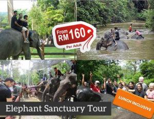 elephant sanctuary full day tour
