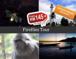 fireflies tour